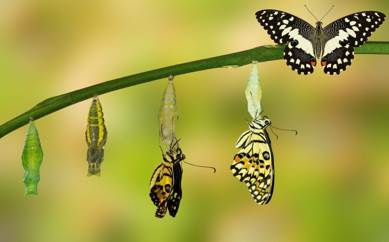 Growing Together: Preparing for Transformation