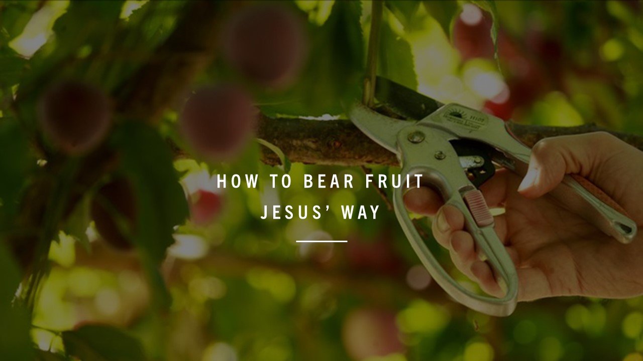 How to Bear Fruit Jesus' Way